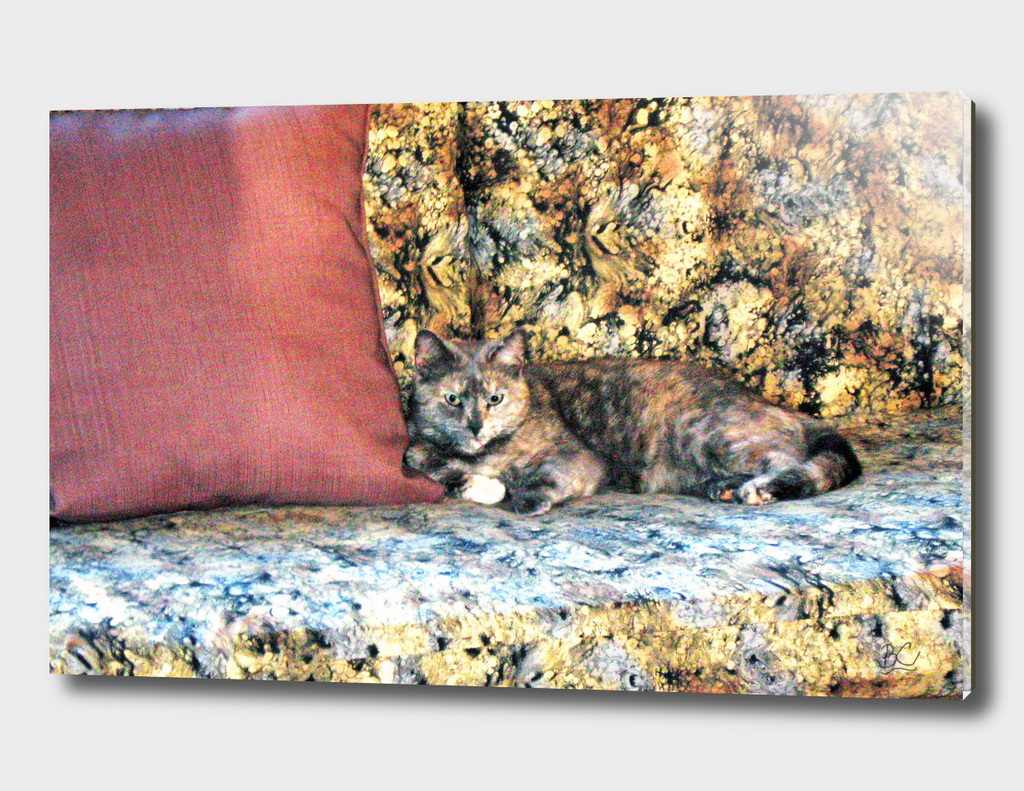 Chloe the Camoflaged Calico Cheshire Cat