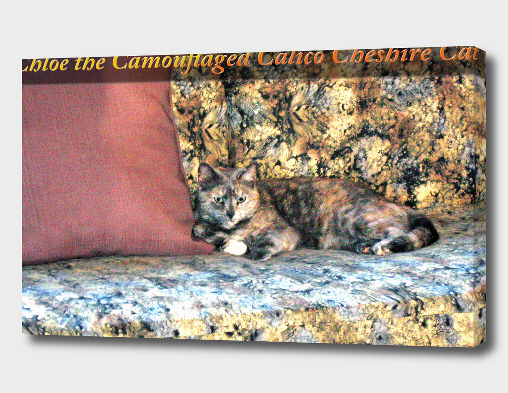 Chloe the Camouflaged Calico Cheshire Cat