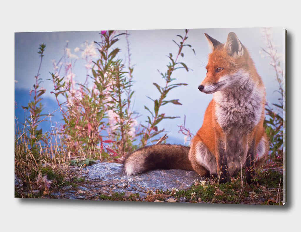 a friendly foxy poser