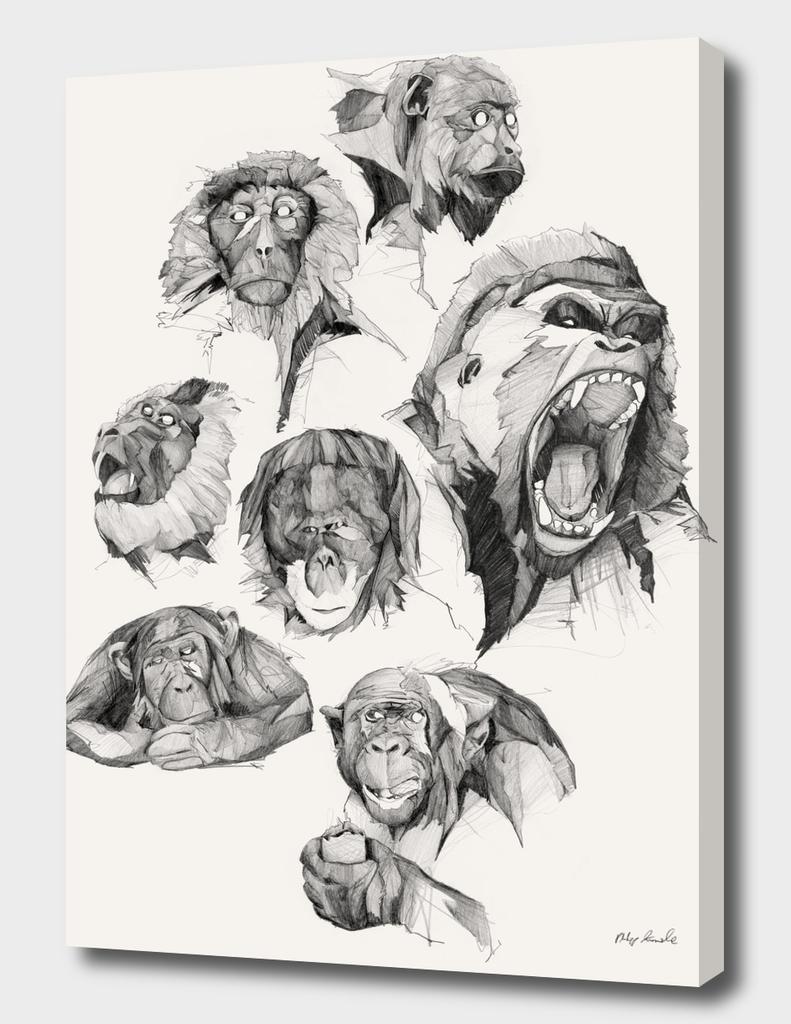 Seven Monkeys – All the Monkeys