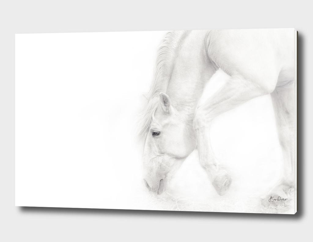 Soft White Stallion