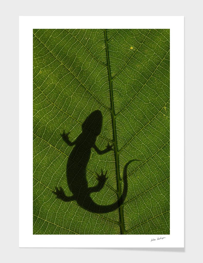 salamander on leaf