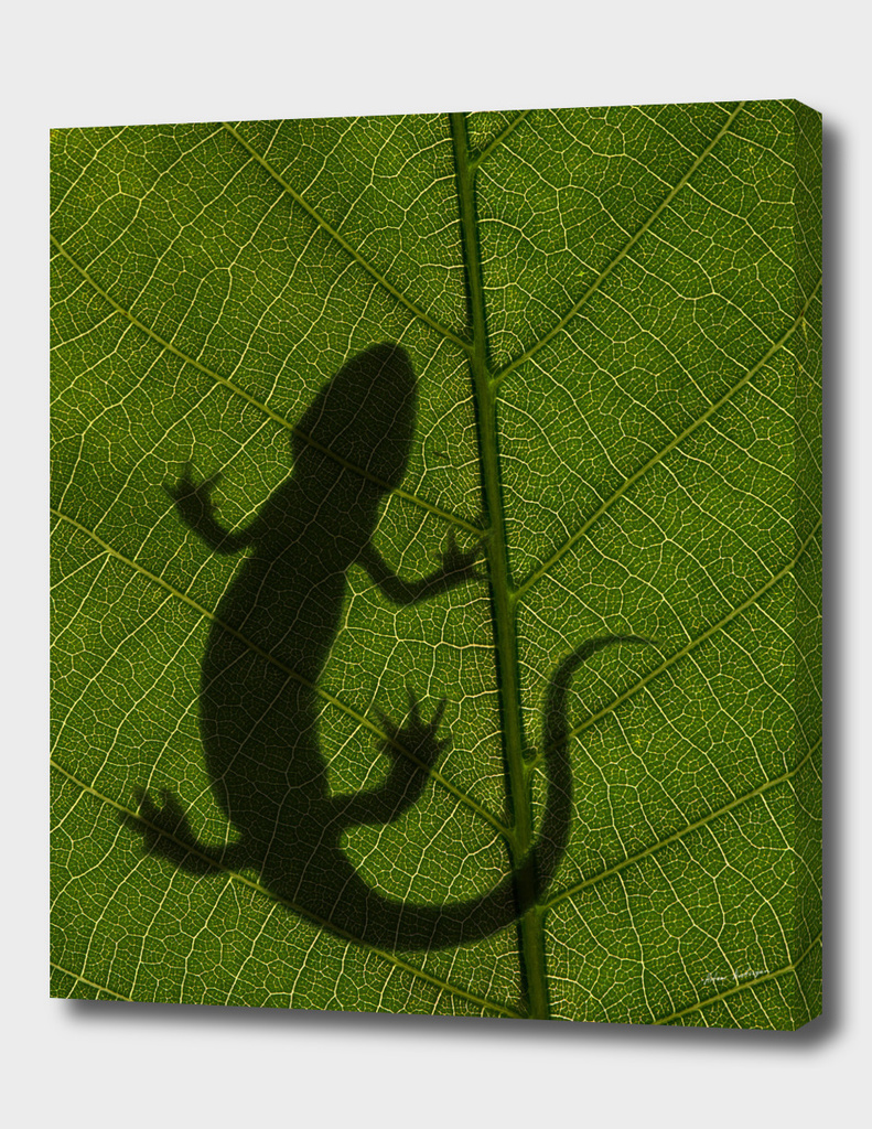 salamander on leaf