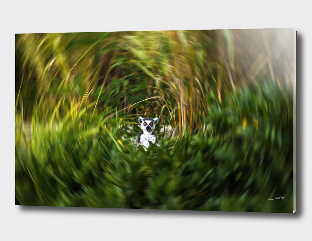 lemur in the bush