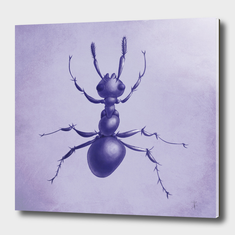 Purple Ant Drawing