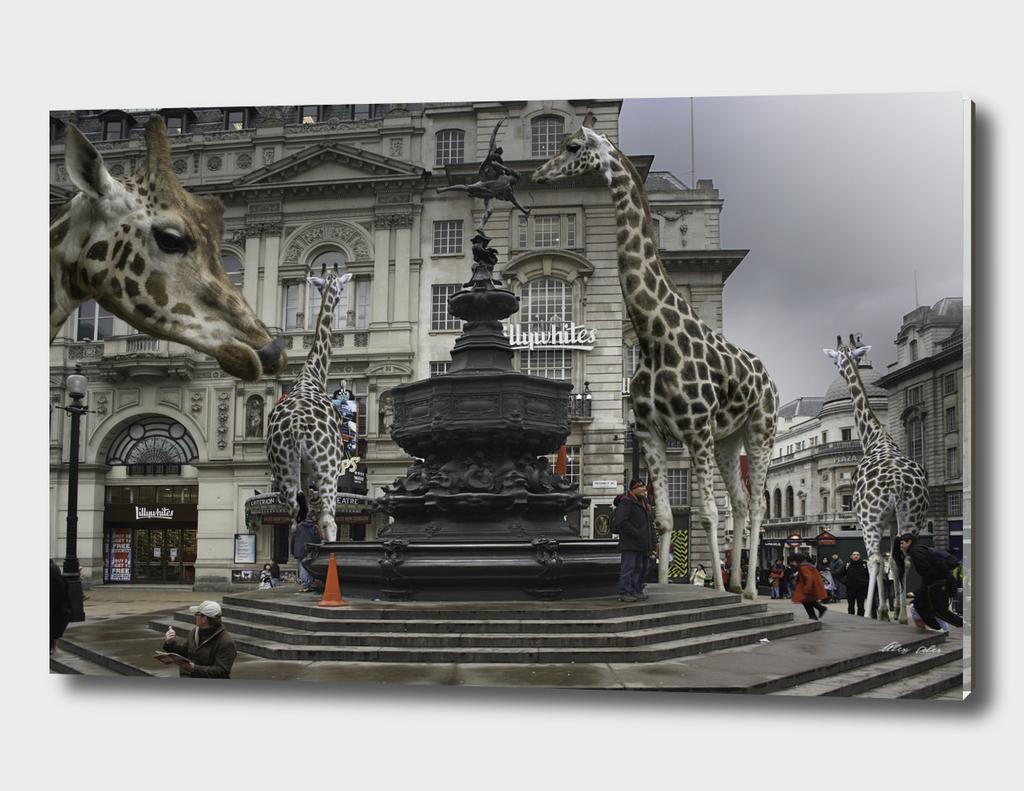 Piccadilly Giraffes