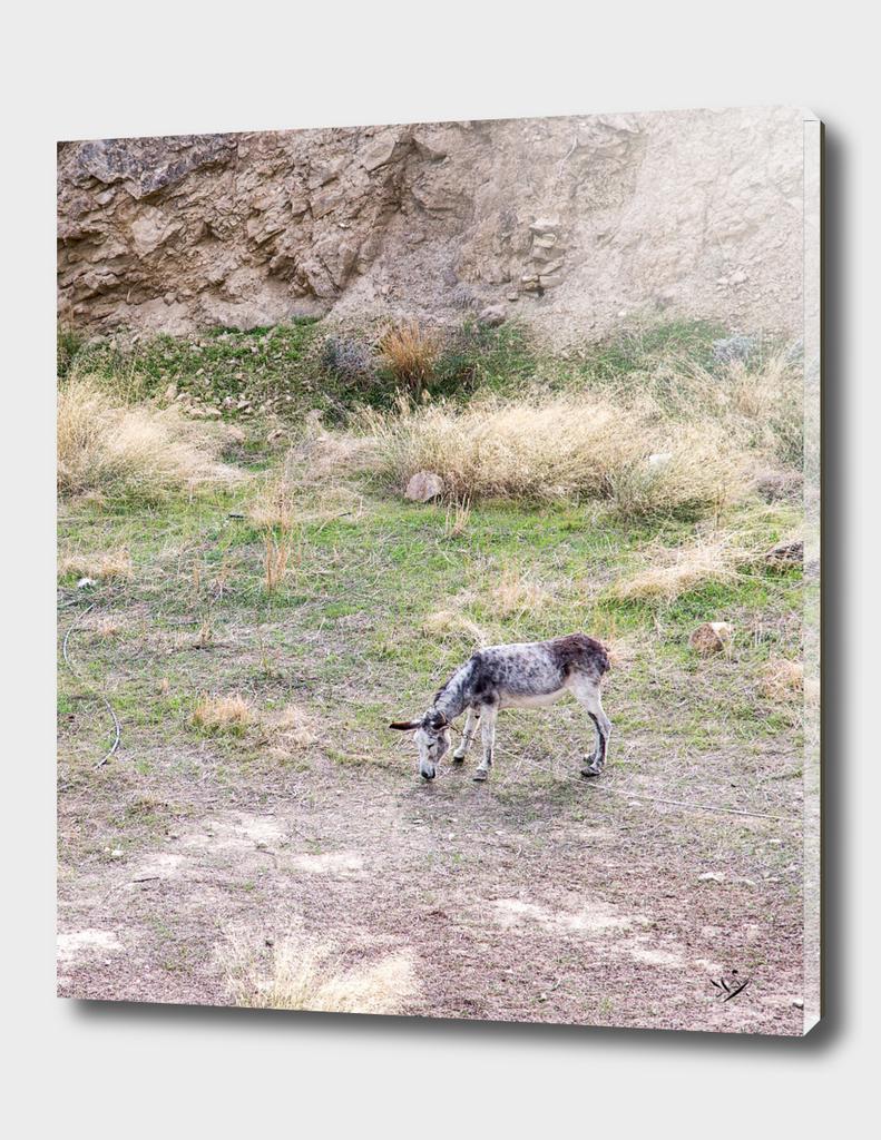 Donkey in Crete
