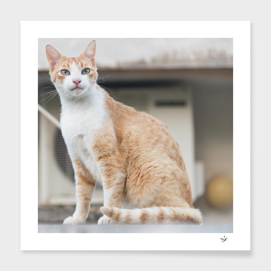 Cretecat