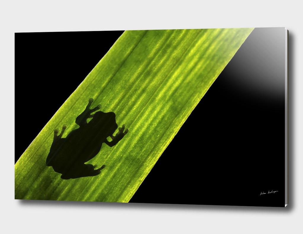 toad on leaf