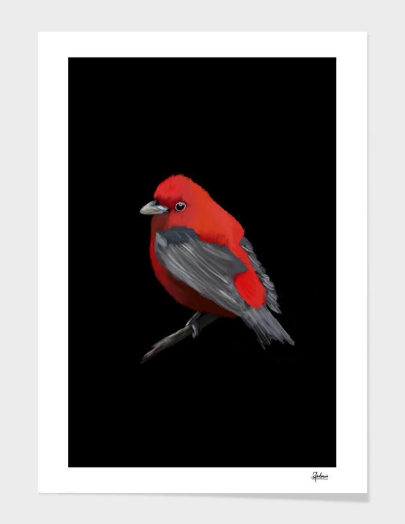 Red Bird Digital Painting