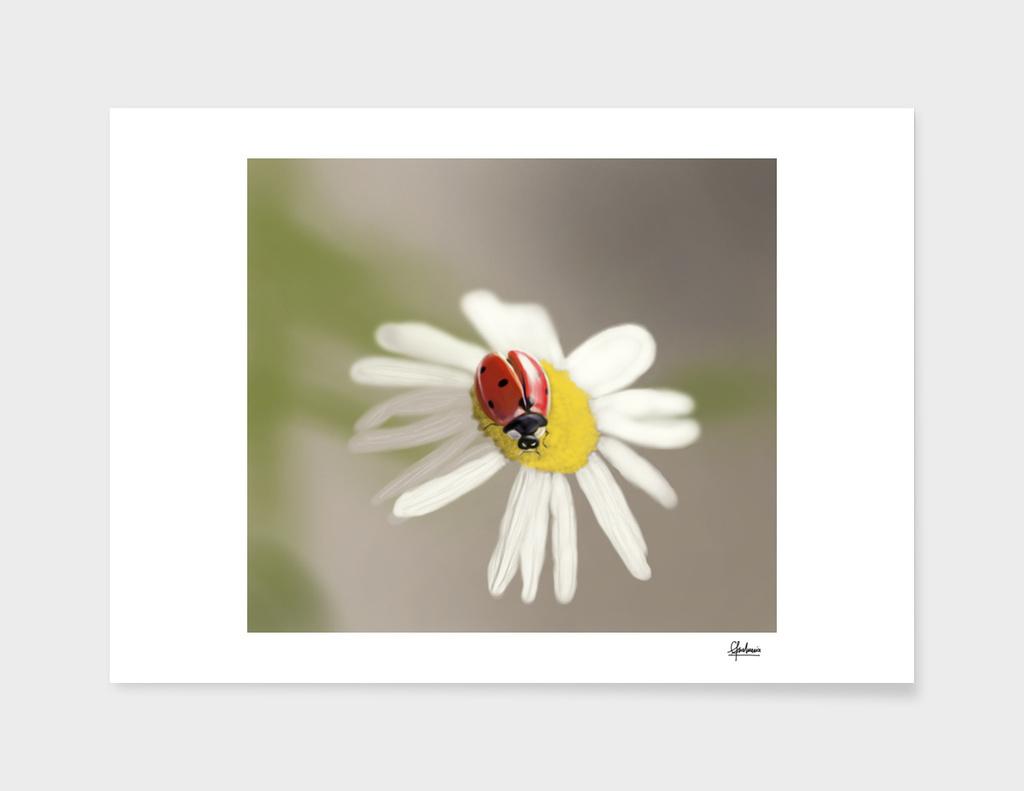 Lady bug on chamomile flower