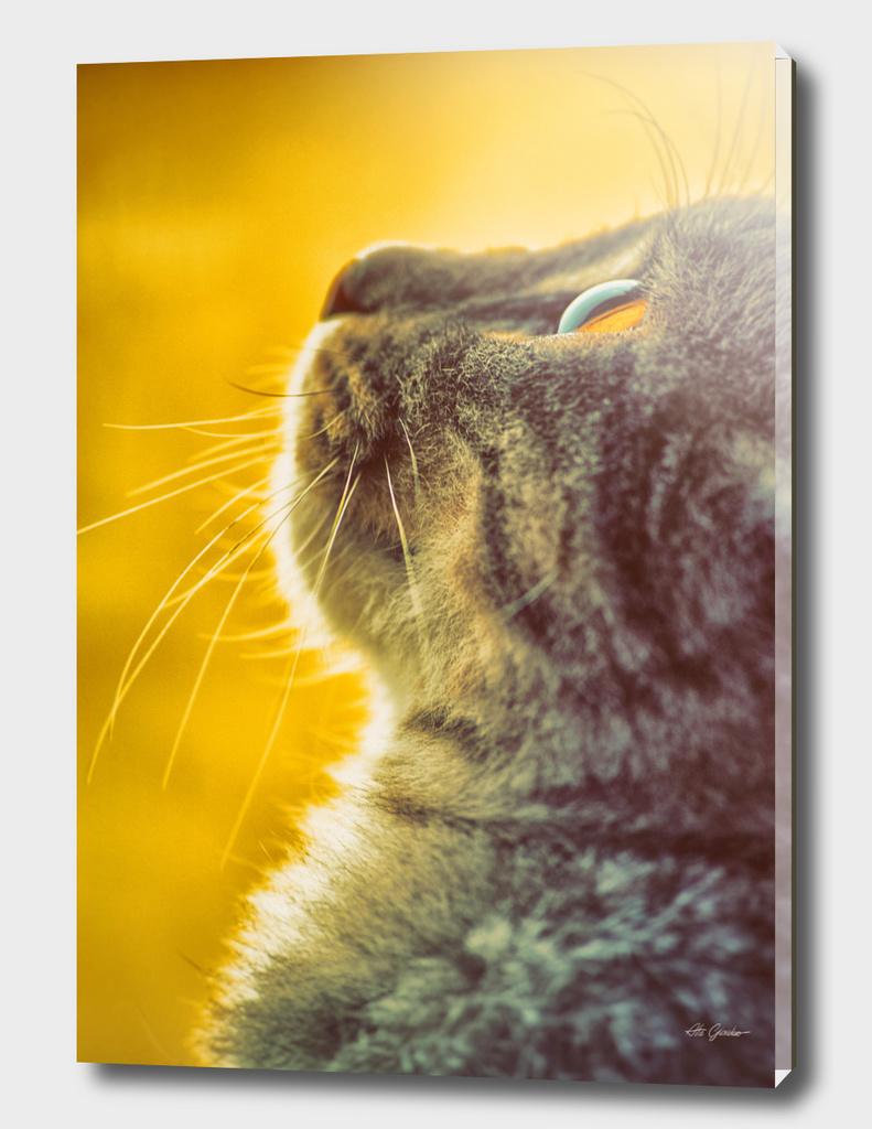 Cat looks up