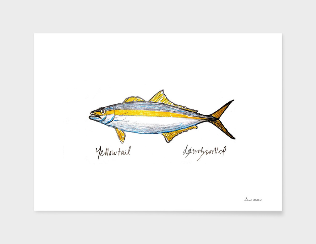 Yellowtail Fish Drawing