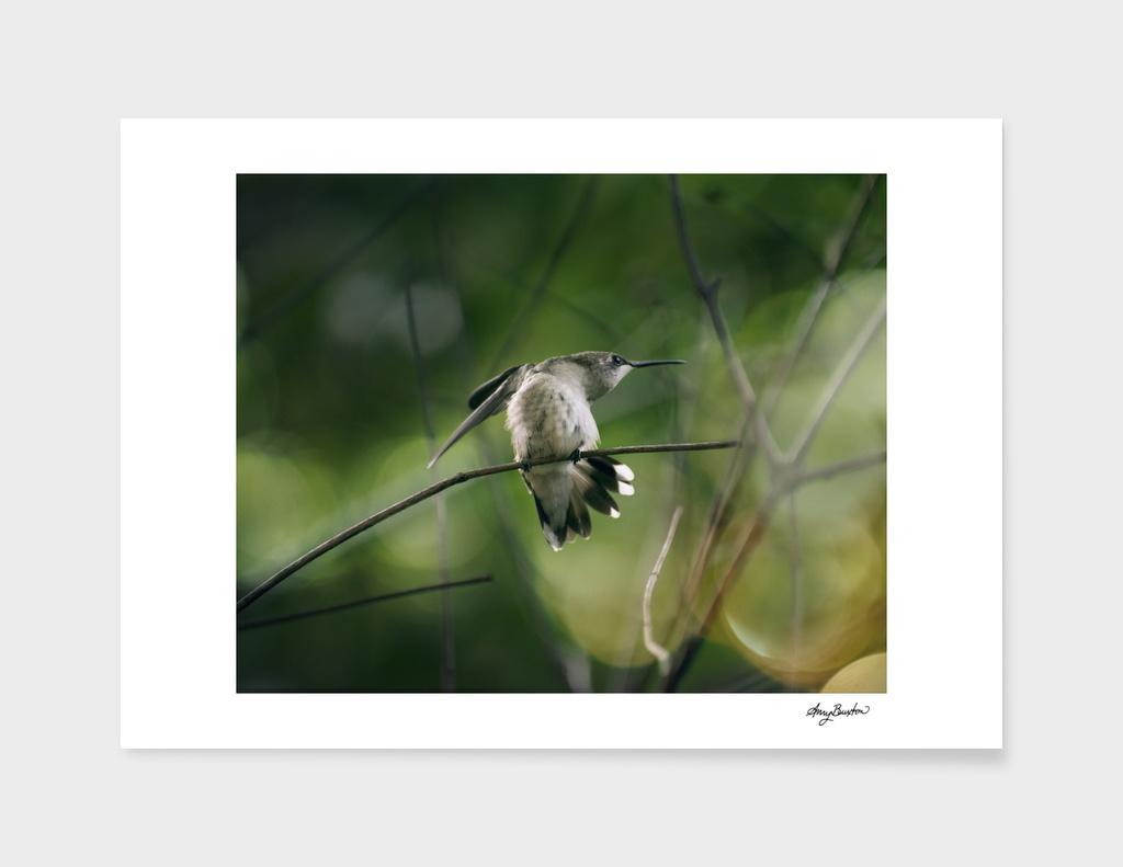 the last hummingbird of the season