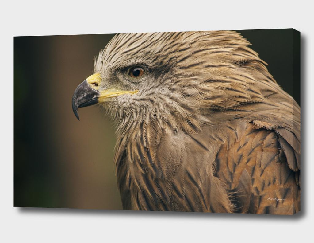 Power Bird I