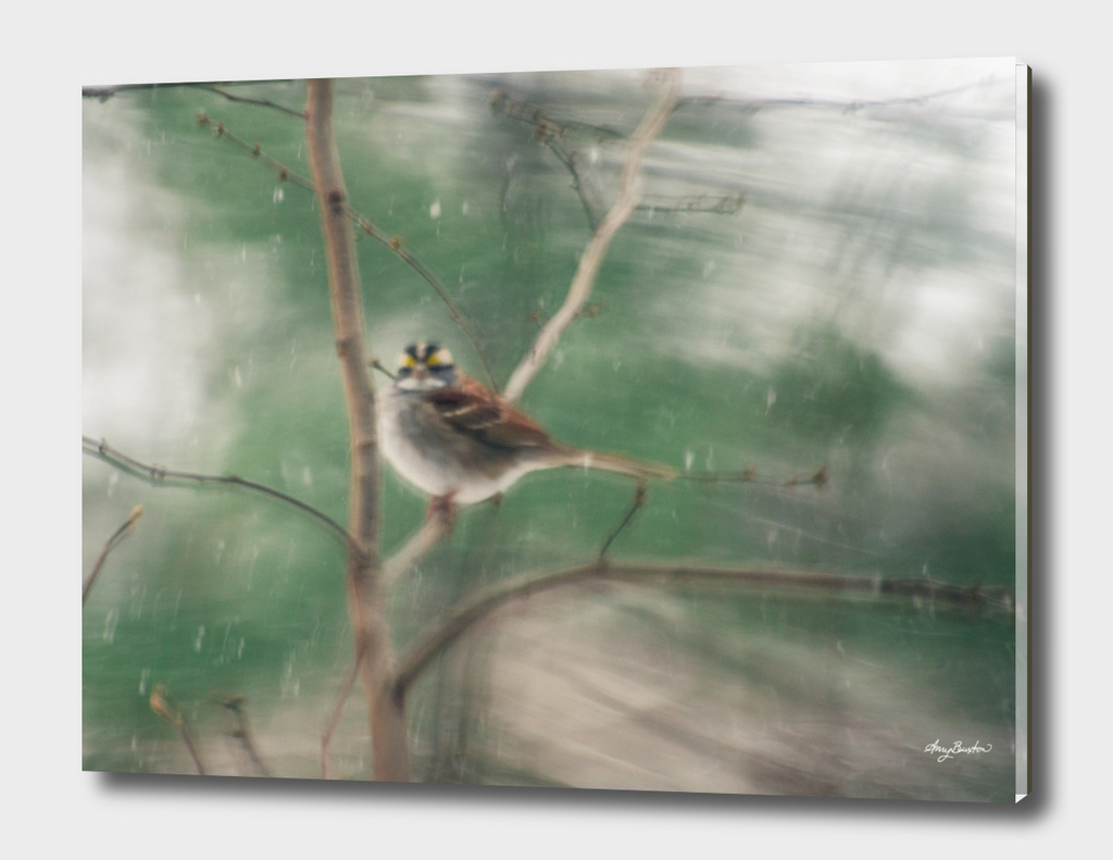 white throated sparrow in snow storm