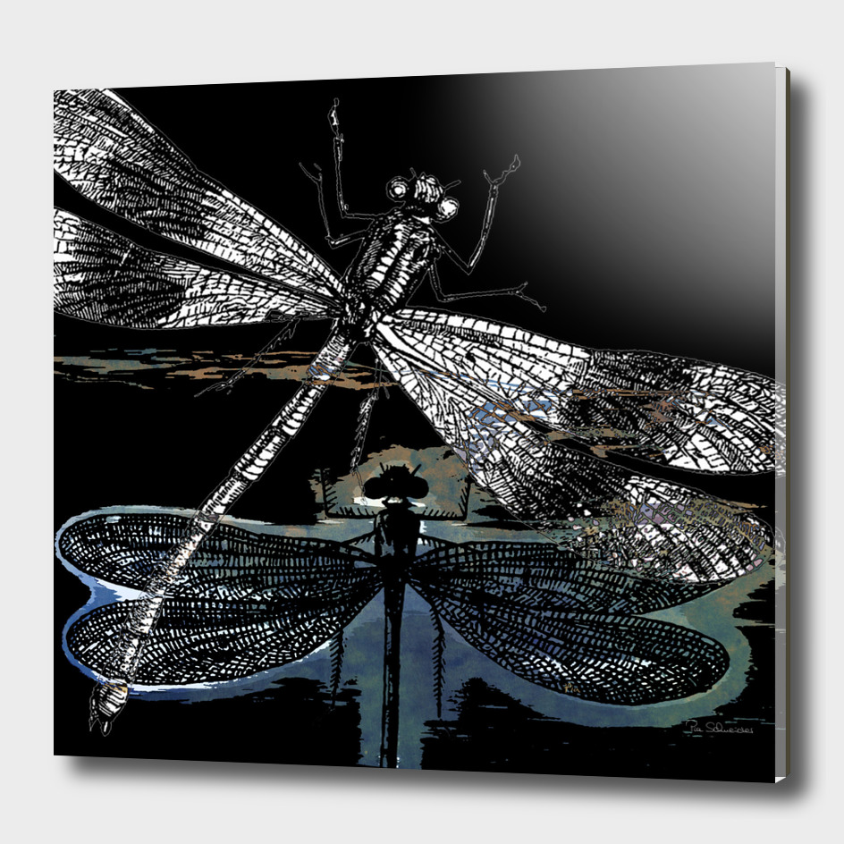DRAGONFLY_meets a friend II