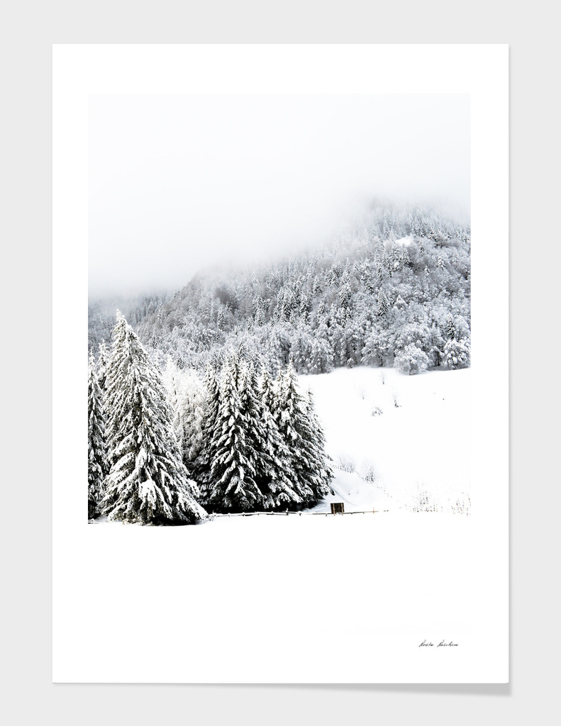 Foggy Winter Forest