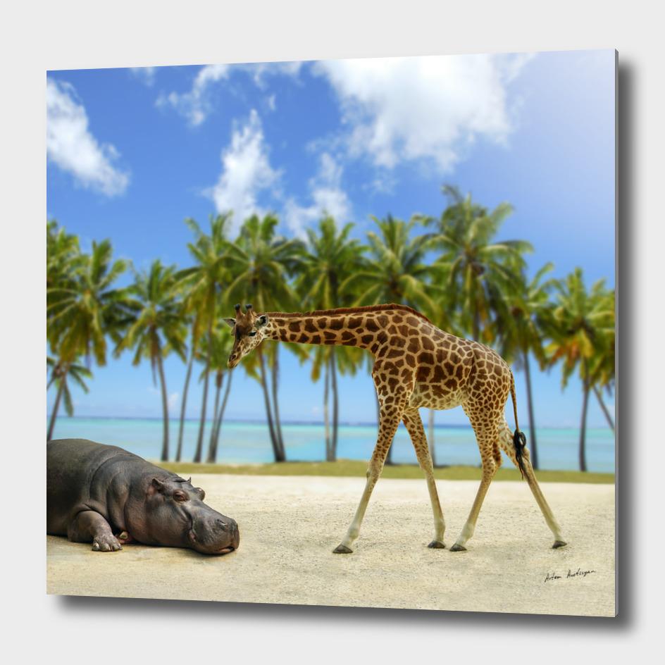 giraffe and hippo