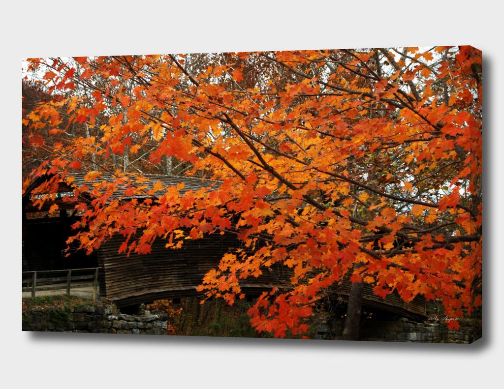 Fall Colors At Humpback Bridge