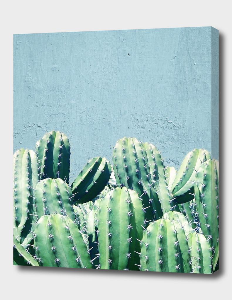 Cactus & Teal