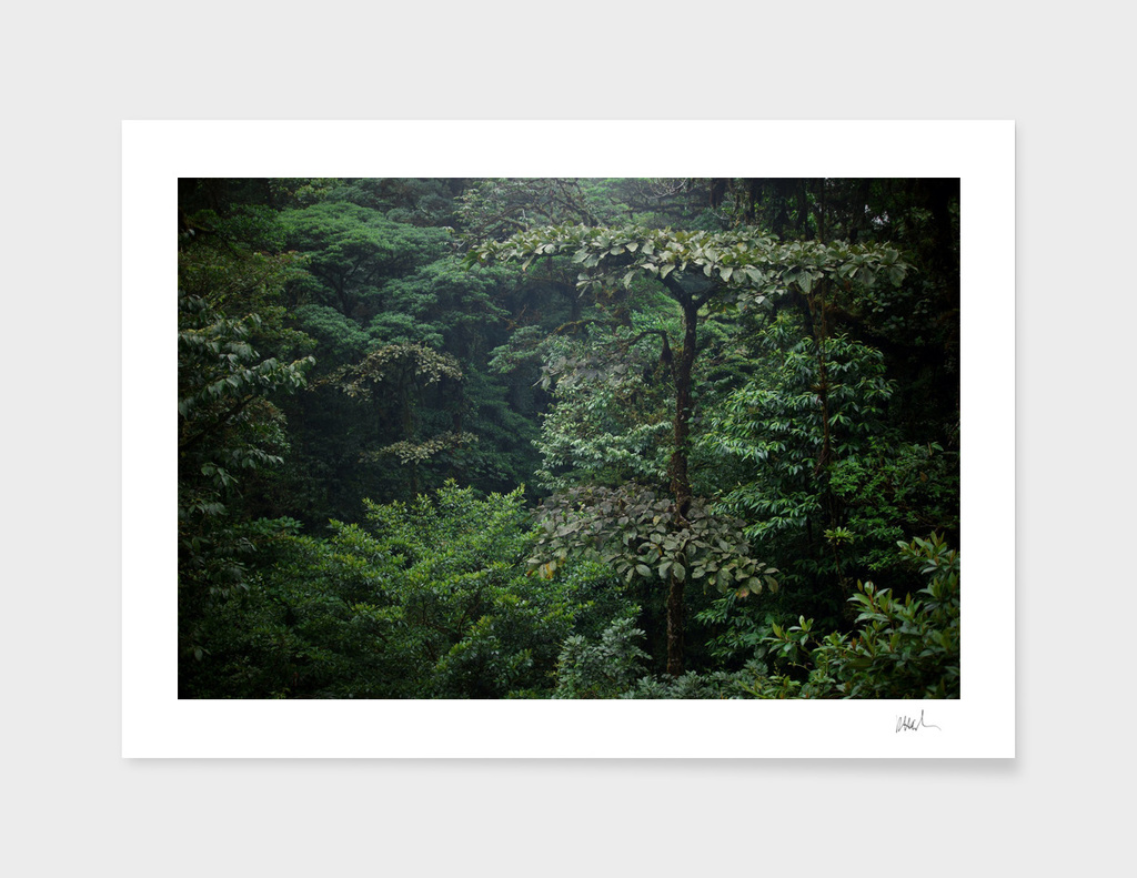 The Forest I