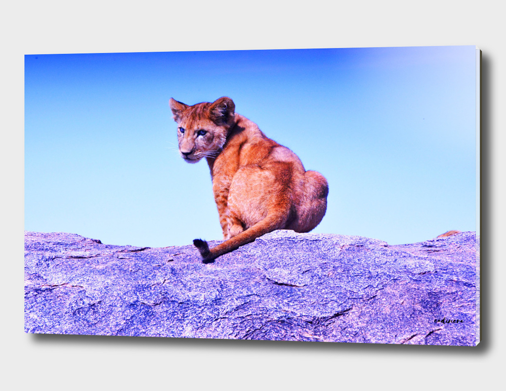 What Are You Looking At? #curioos #buyart #decor