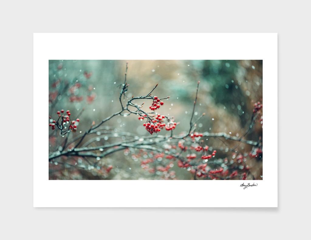 winter berries in snow