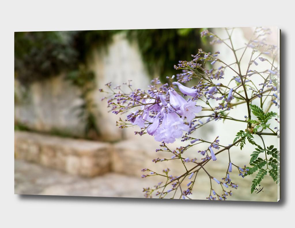 Flowers in Crete