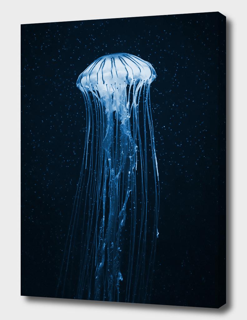 Night jellyfish