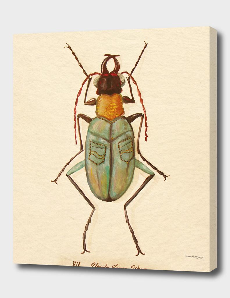 Bug £4