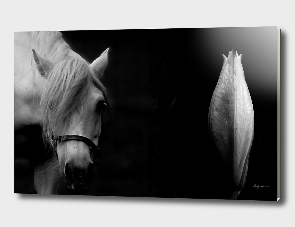 HORSE AND LILY 5