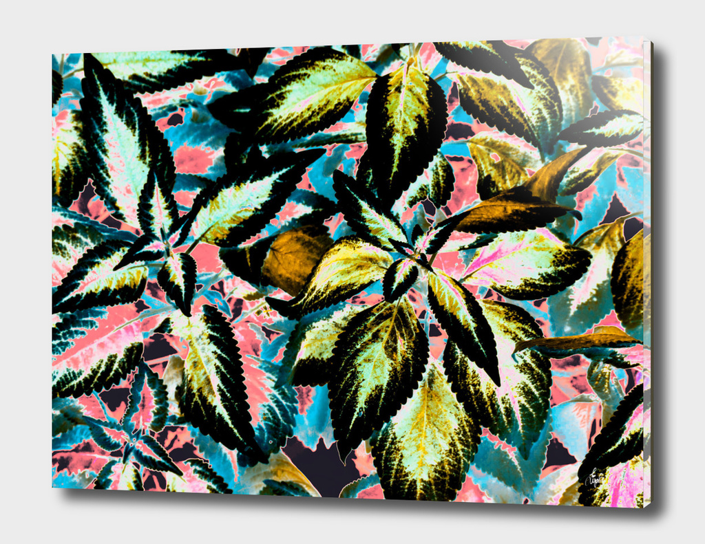 Tropical Leaf Jungle