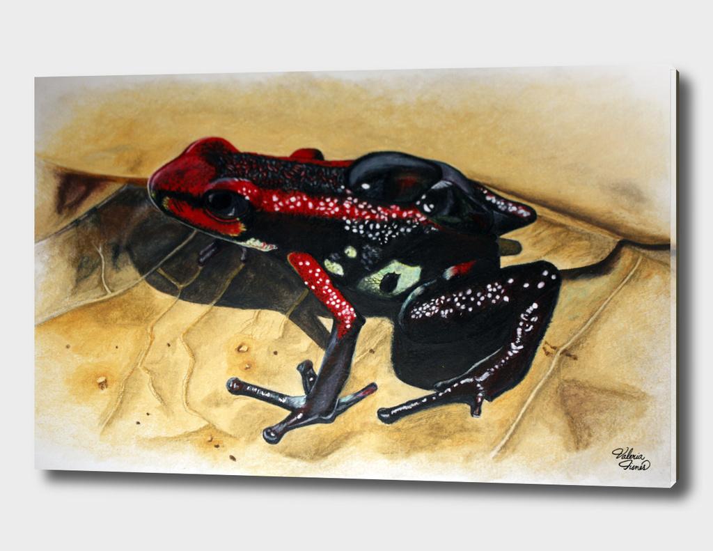 Cauca Poison Frog - Andinobates bombetes