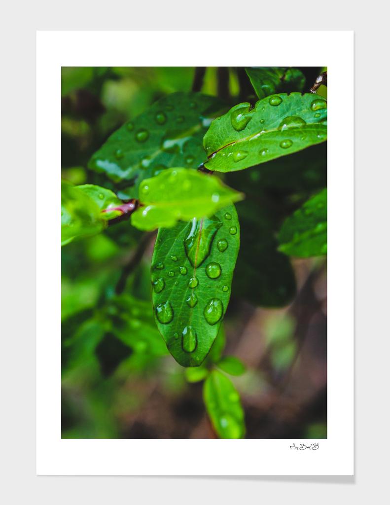 The Garden: After Rain