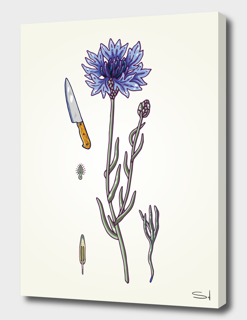blue cornflower and knife
