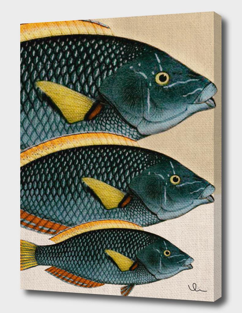 Fish Classic Designs 10