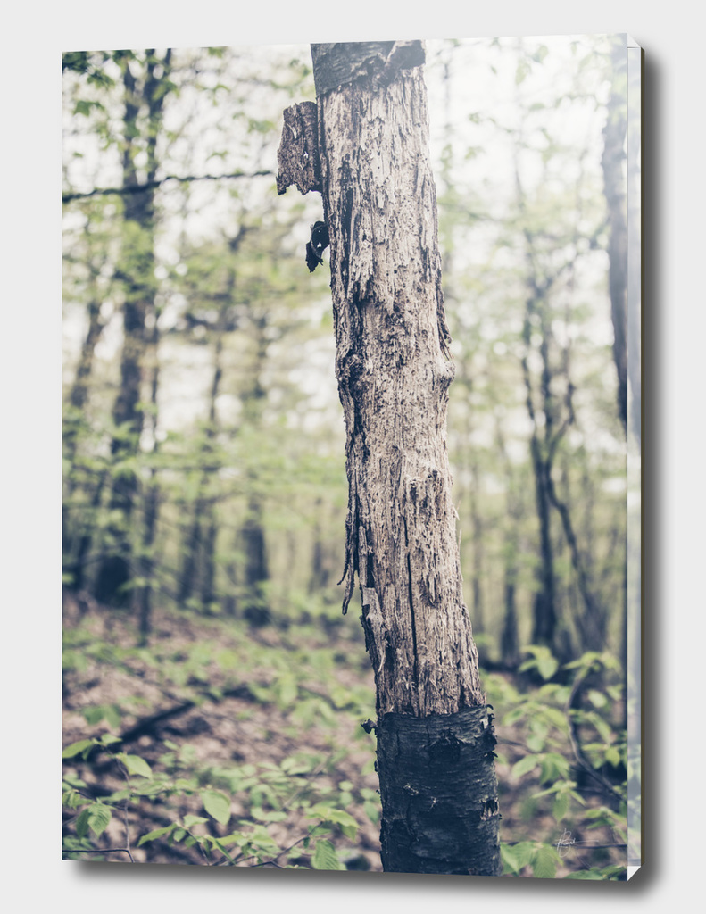 Alone and bare? - From the Nature as Abstract Series