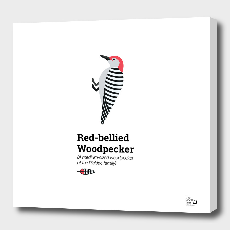 The Red-Bellied Woodpecker