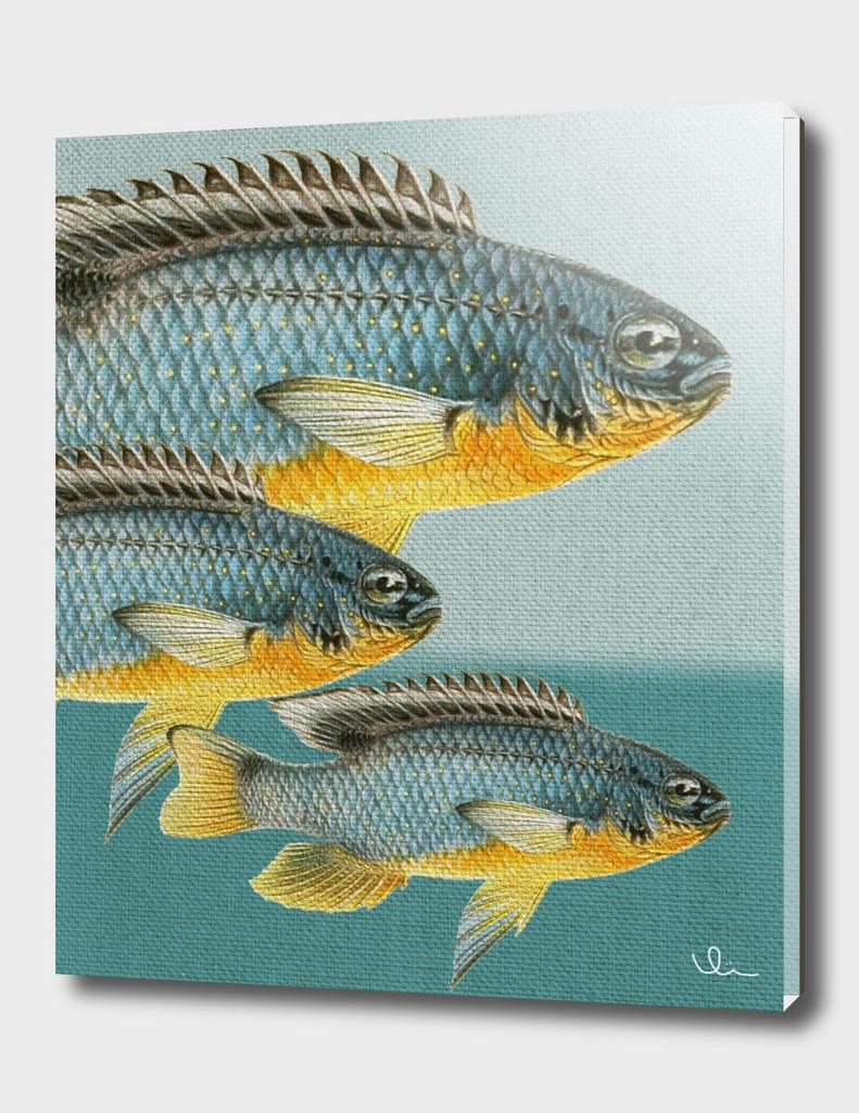 Fish Classic Designs 12