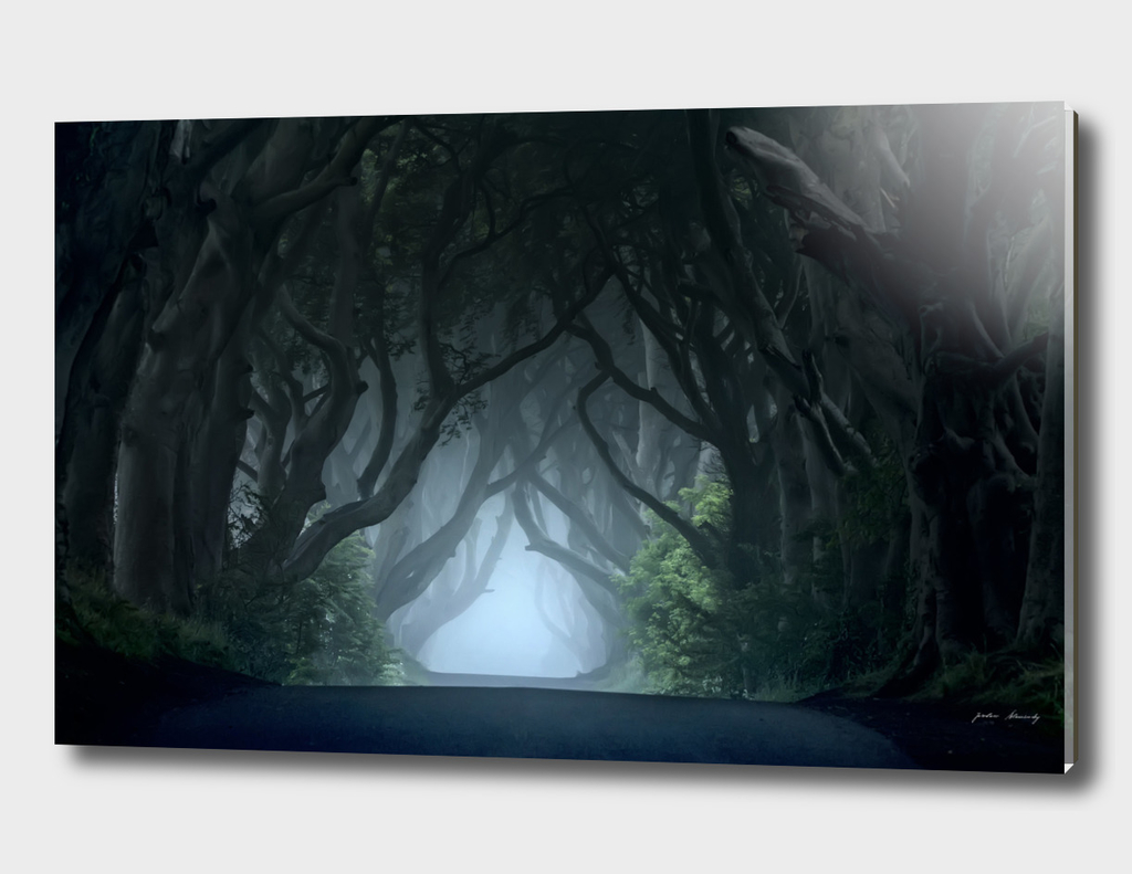 Foggy morning at the Dark Hedges