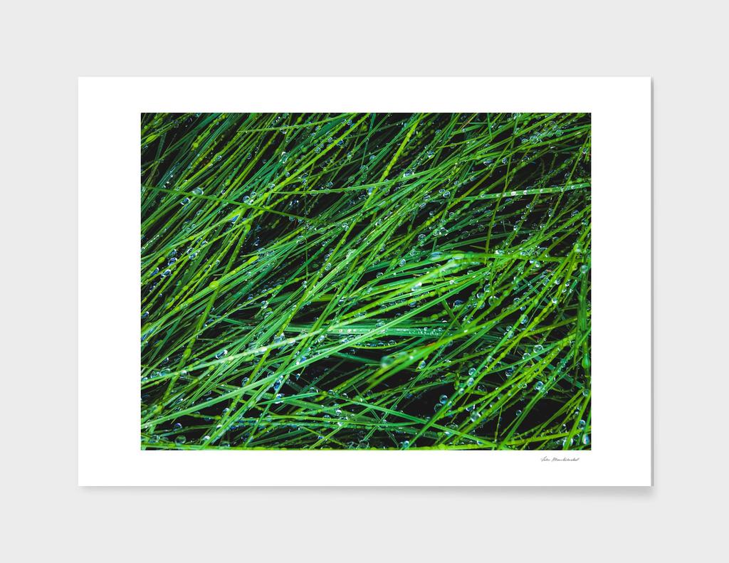 closeup green grass field texture with water drop