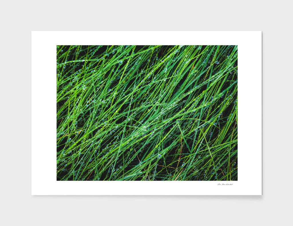 closeup green grass texture background with raindrops