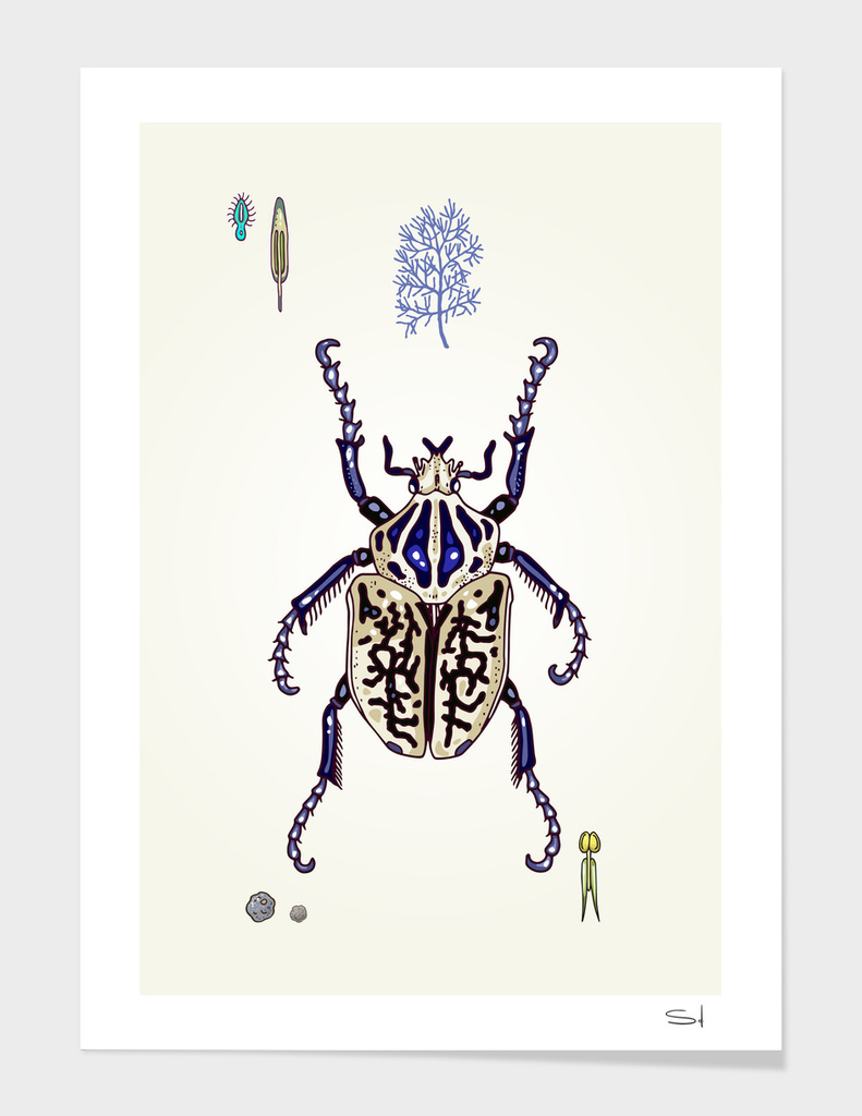 Happy Goliath beetle