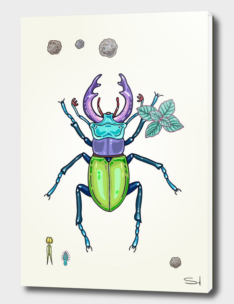 happy stag-beetle