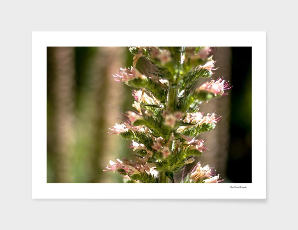 Flower#2