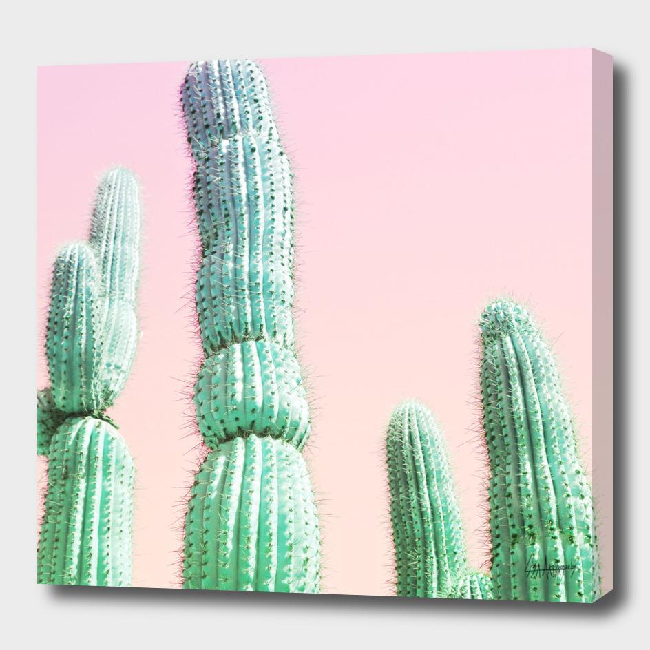 Cactus Pop