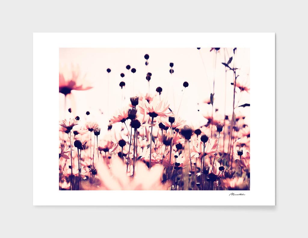 Landscape blur pink flowers