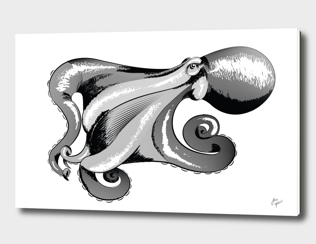 Octopus BW ink
