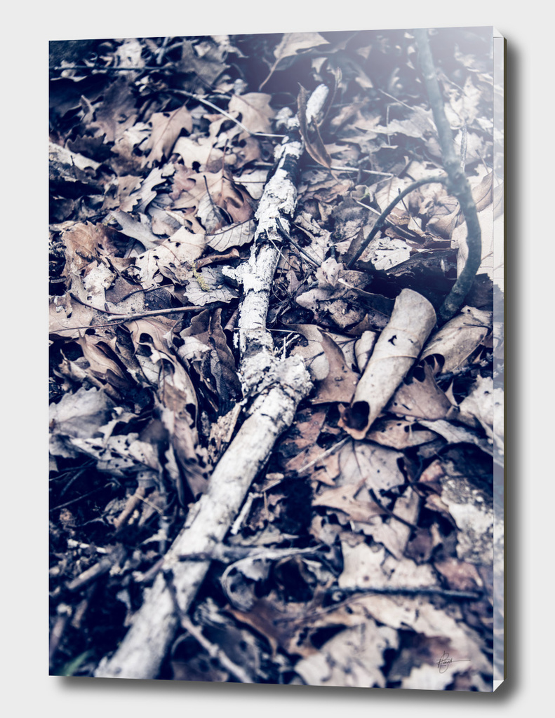 Withering - From the Nature as Abstract Series